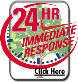 emergency tree service and tree removal york pa - lancaster pa - harrisburg pa hanover pa